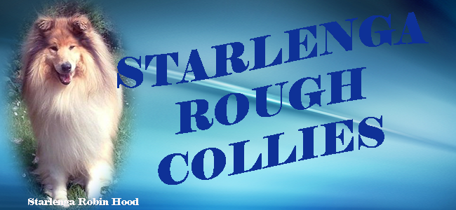 Starlenga rough collies