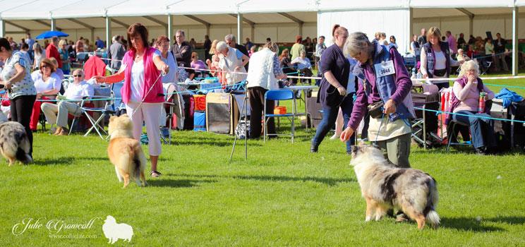 Darlington Dog Show Entries